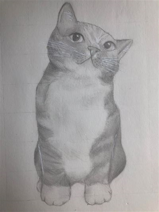 An drawing in pencil of a cat